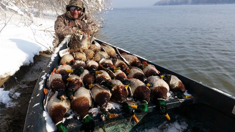 Πάπιες, χήνες στον Δούναβη, 1 Νοέμβριου